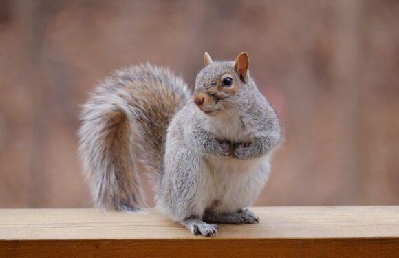 Vida de esquilo II